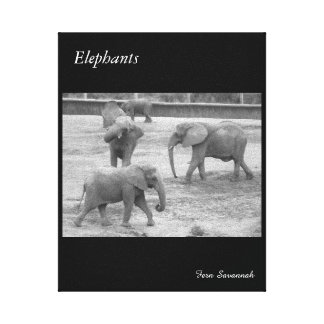 Elefantes na lona da galeria pelo savana da