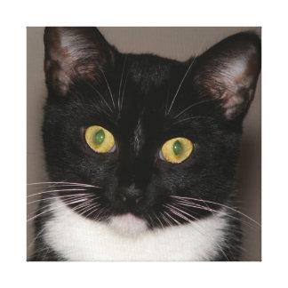 Elvira o gato, cópia das canvas