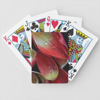 Embers da tulipa cartas de baralhos