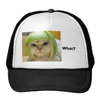 engraçado-gato, que? boné