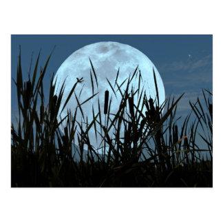 Entre a lua e o cartão do pântano