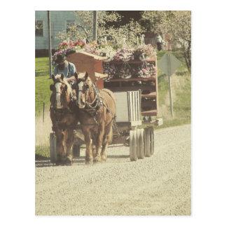 Entrega da flor de Amish Cartão Postal