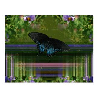 Envoltório da borboleta cartão postal