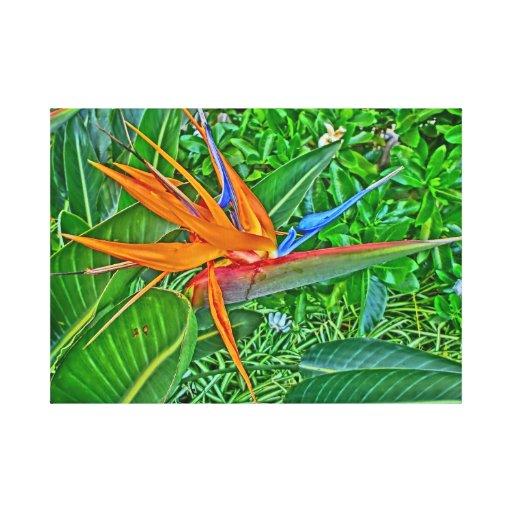 Envoltório das canvas de Havaí do paraíso do pássa Impressão De Canvas Esticada