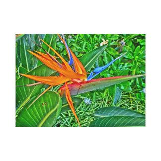 Envoltório das canvas de Havaí do paraíso do pássa Impressão Em Tela