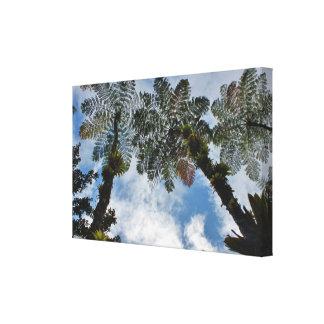 Envoltório tropical das canvas das palmas de