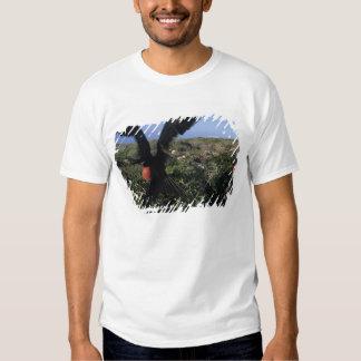 Equador, Ilhas Galápagos, magníficas T-shirts