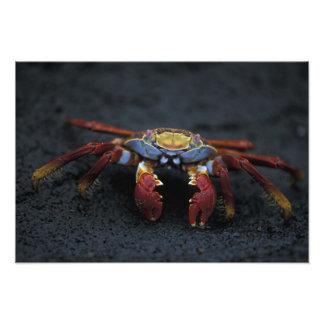 Equador, Ilhas Galápagos, Sally Lightfoot Foto