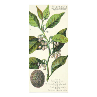 Ervas especiaria da comida do vintage, sementes da 10.16 x 22.86cm panfleto