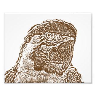 esboço marrom gráfico parrot png da opinião princi arte de fotos