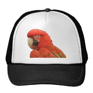 Esboço preto do papagaio bone