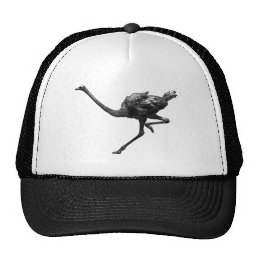 Esboço Running da avestruz Bone