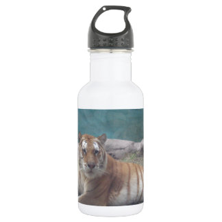 Escala selvagem do tigre de