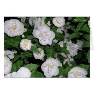 Escalada dos rosas brancos cartão comemorativo