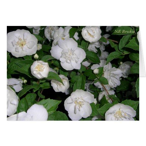 Escalada dos rosas brancos cartoes