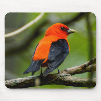 Escarlate de Tanager Mousepad