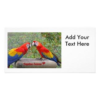 Escarlate do casal feliz de Mackaws dos pássaros Cartão Com Foto