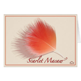Escarlate do macaw - cartão