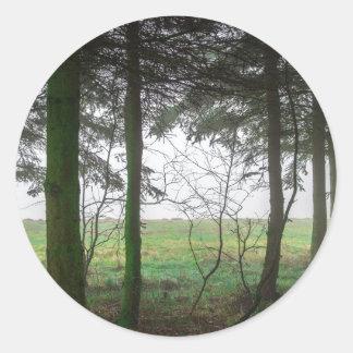 Esclarecimento de negligência da floresta na névoa adesivo