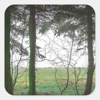 Esclarecimento de negligência da floresta na névoa adesivo quadrado