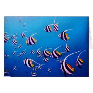 Escola dos peixes, Banda Neira Cartão De Nota