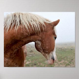 Escolha o impressão ocidental do cavalo da arte do