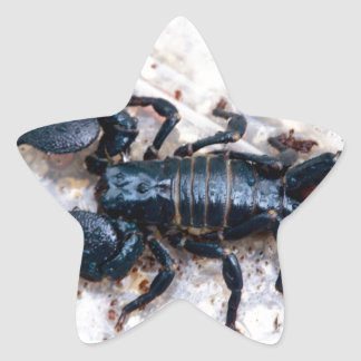 Escorpião Adesito Estrela