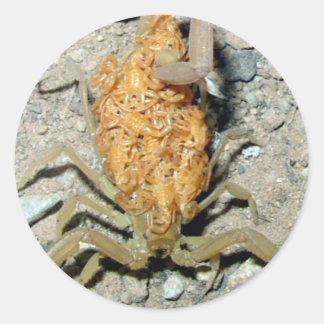 Escorpião do bebê adesivo