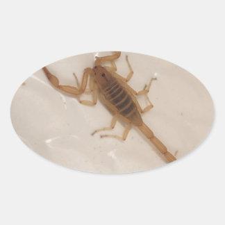 Escorpião do latido da arizona adesivo oval