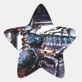 Escorpião grande, mau adesito estrela