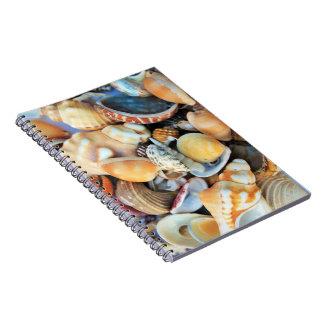 Escudos coloridos do mar caderno