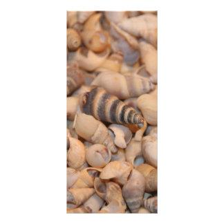 Escudos minúsculos do mar modelo de panfleto informativo