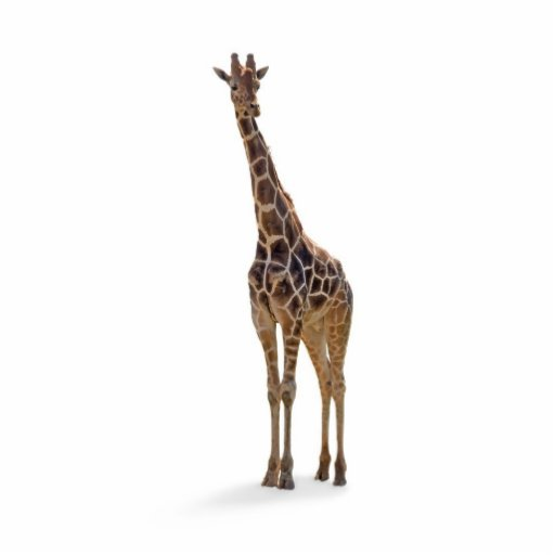 Escultura da foto do girafa fotoesculturas