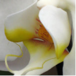 Escultura da foto - orquídea foto escultura