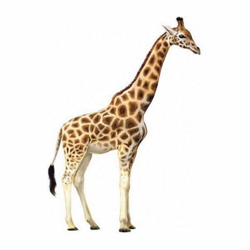 Escultura do girafa escultura fotos
