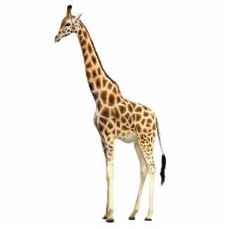 Escultura do girafa foto escultura