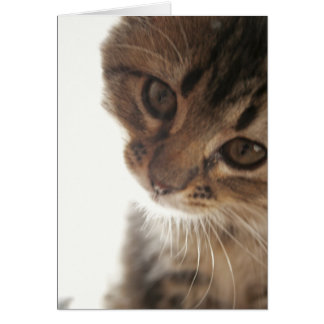Escuteiro: Cartão vazio da cara curiosa do gatinho