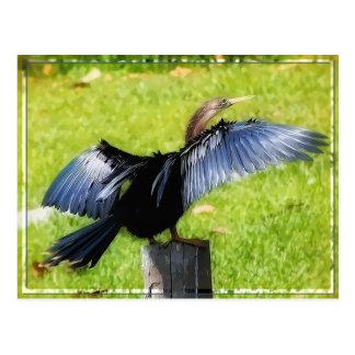 Espalhe seu cartão das asas