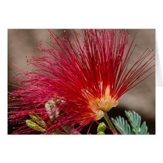 Espanador vermelho da fada de Baja Cartão Comemorativo