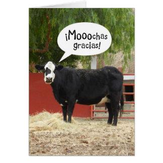 Espanhol engraçado - cartões de agradecimentos