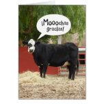 Espanhol engraçado - cartões de agradecimentos fal