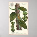 Especiarias das ervas da comida do vintage, planta posters