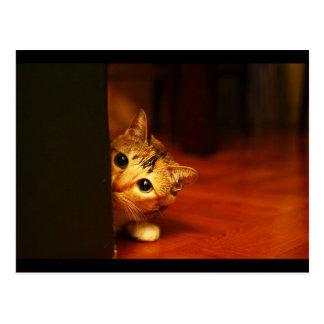 espreitar sneaking do gato do gatinho cute_funny_a cartoes postais
