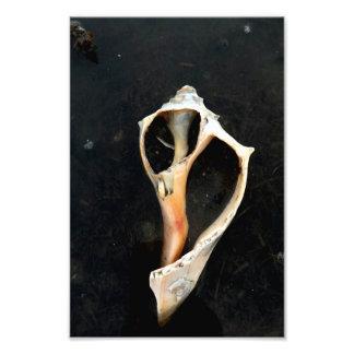 Esqueleto de Welk Impressão De Foto