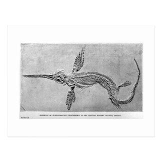 Esqueleto do cartão da arte do Ichthyosaurus