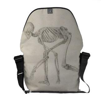 Esqueleto humano: Vista lateral na postura de agac Bolsas Mensageiro