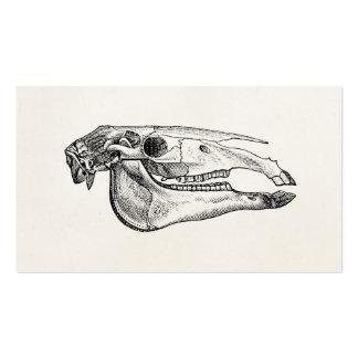Esqueleto personalizado esqueleto do crânio do cartão de visita