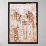 Esqueletos humanos Leonardo da Vinci dos desenhos  Poster