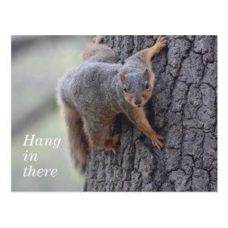 Esquilo aderindo-se cartão postal