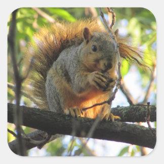 Esquilo bonito com a porca em etiquetas da árvore